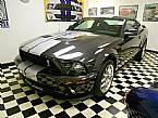 2007 Ford Shelby Picture 6